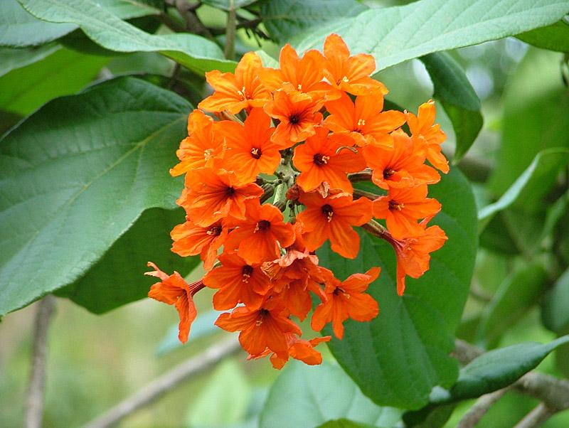 tropische pflanzen in thailand reisef hrer thailand