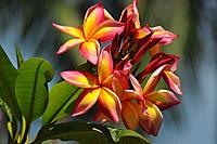 Dom Rep - © tropical-travel.com