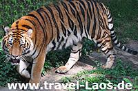 © tropical-travel.com