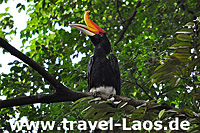 Nashornvogel © tropical-travel.com
