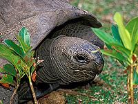 Aldabra Riesenschildkröte © Bkaiser | Dreamstime.com