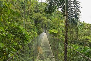 Baumkronenbrücke, Costa Rica © Dimitry Bulakov | 123RF.com