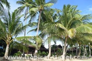 Maenam Resort, Maenam © tropical-travel.de