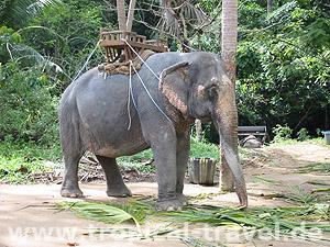 Elefanten-Trecking © tropical-travel.de