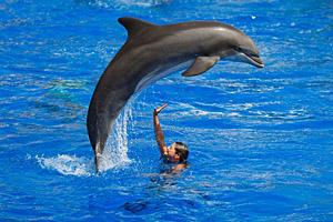 Delfinshow © Konstantin Tronin | 123RF.com