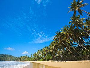 Sri Lanka beach © Dmitry Rukhlenko | Dremstime.com