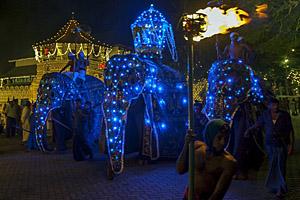 Perehera Festival, Kandy © Thomas Wyness   123RF.com