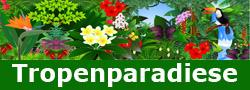 die schönsten tropischen Resorts und Hotels